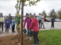 Sajenje dreves in šolski parlament
